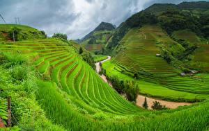 Bilder Vietnam Gebirge Acker Flusse Gras Natur