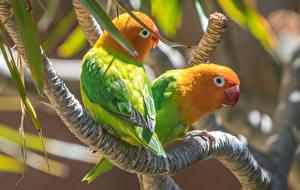 Wallpaper Birds Parrots Branches 2 Animals