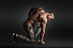 Hintergrundbilder Bodybuilding Mann Rücken Muskeln