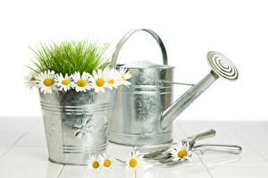 Bilder Kamillen Eimer Gras Blüte