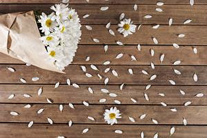 Photo Camomiles Wood planks Petals