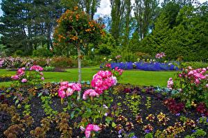 Hintergrundbilder Kanada Garten Rose Vancouver Strauch Bäume Queen Elizabeth Garden Natur