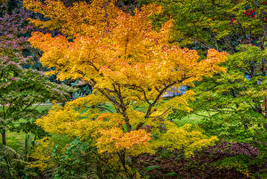 Fotos Kanada Park Herbst Vancouver Bäume VanDusen Botanical Garden Natur
