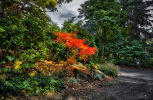 Hintergrundbilder Kanada Parks Vancouver Bäume Strauch VanDusen Botanical Garden Natur
