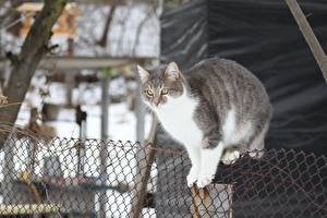 Pictures Cats Fence Animals