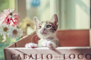 Fotos Katze Katzenjunges Starren