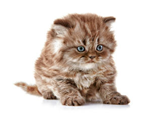 Images Cats White background Kitty cat Staring Animals