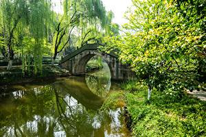 デスクトップの壁紙、、中華人民共和国、公園、池、橋、木、自然