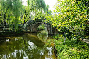 Pictures China Parks Pond Bridges Trees Nature