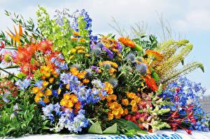 Bilder Chrysanthemen Flockenblumen Löwenmäuler Blumen