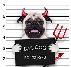 Bilder Hunde Kreative Dämon Bulldogge Horn Tränen Lustige Bad Dog