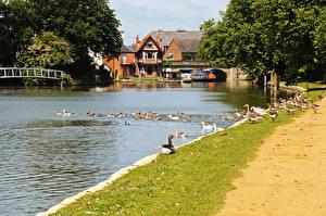 Hintergrundbilder England Gebäude Flusse Entenvögel Bootssteg Oxford Oxfordshire Städte