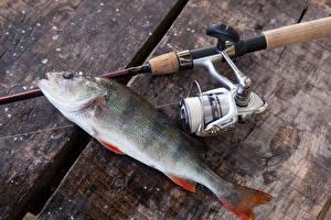 Fotos Fischerei Angelrute Fische - Lebensmittel Bretter European perch Sport