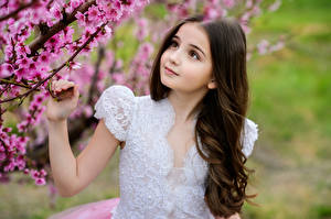 Picture Flowering trees Little girls Hands Beautiful