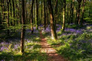 Bilder Wälder Frühling Bäume Baumstamm Weg