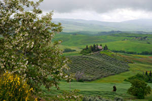 Hintergrundbilder Italien Toskana Landschaftsfotografie Felder Blühende Bäume Hügel Ast