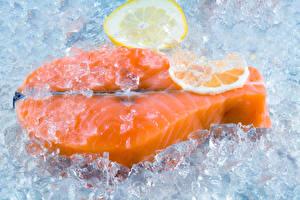 Photo Lemons Fish - Food Salmon Ice