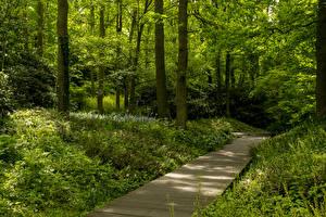 壁纸、、オランダ、公園、木、草、Keukenhof Gardens、
