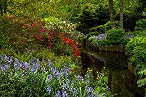 Bilder Niederlande Park Teich Glockenblumen Strauch Keukenhof Gardens Natur