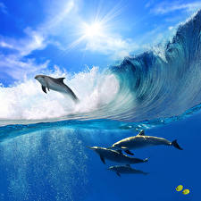 Fotos Ozean Delfine Wasserwelle Meer Sprung Tiere