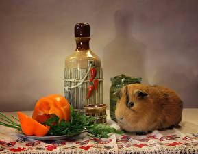 Image Pepper Cavy Bottle Animals