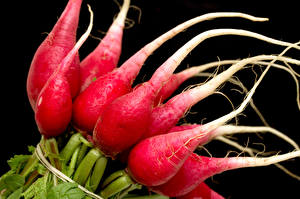 Wallpaper Radishes Closeup Black background Food