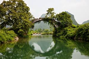壁纸、、川、橋、木、アーチ、自然