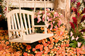 壁纸、、バラ、オランダカイウ、ベンチ、