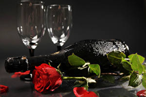 Wallpapers Roses Champagne Gray background Red Petals Bottle Stemware Drops Flowers