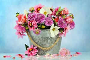 Fotos Rosen Dahlien Kamillen Farbigen hintergrund Eimer Kronblätter Blüte
