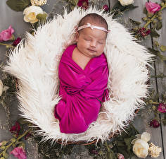 Picture Roses Baby Sleep Children