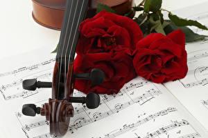 Hintergrundbilder Rosen Noten Drei 3 Bordeauxrot