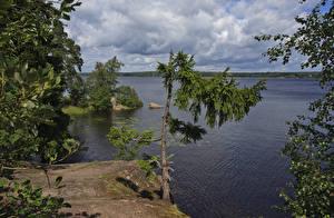 Images Russia Parks Coast Rivers Spruce Park Monrepos Vyborg Nature