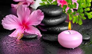 Hintergrundbilder Steine Kerzen Eibisch Spa Tropfen Blumen