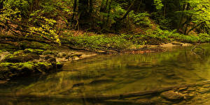 Hintergrundbilder Schweiz Wälder Steine Bach Laubmoose Orbe Natur
