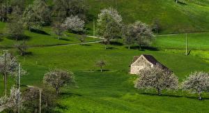 Bilder Schweiz Gebäude Blühende Bäume Baselland Natur