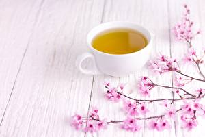 Wallpapers Tea Cup Cherry blossom Boards