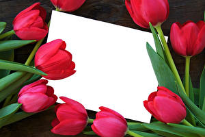 Images Tulips Closeup Template greeting card Red Sheet of paper flower