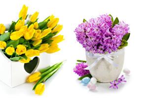 Fotos Tulpen Hyazinthen Weißer hintergrund Vase Ei Blumen