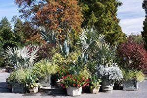Fotos Vereinigte Staaten Garten Strauch Nemours Mansion and Gardens