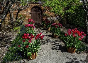 Bilder USA Garten Frühling Tulpen Kalifornien Tür Filoli Gardens Natur