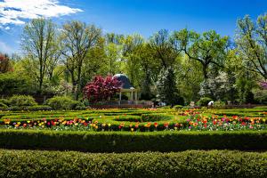 壁纸、、アメリカ合衆国、庭園、春、チューリップ、木、低木、Missouri Botanical Garden、自然