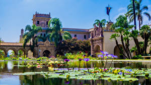 Wallpapers USA Parks Houses Pond Nymphaea San Diego Palm trees Balboa Park