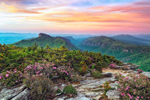 Pictures USA Parks Mountains Landscape photography Shrubs Roan Mountain Rhododendron Gardens