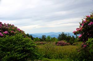 Fondos de Pantalla Estados Unidos Parque Rhododendron Arbusto Carolina Roan Mountain Rhododendron Gardens Naturaleza