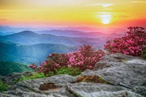 Bilder Vereinigte Staaten Landschaftsfotografie Sonnenaufgänge und Sonnenuntergänge Rhododendren Hügel Strauch Roan Mountain Rhododendron Gardens