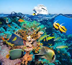 Pictures Underwater world Corals Fish