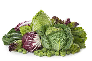 Hintergrundbilder Gemüse Kohl Weißer hintergrund