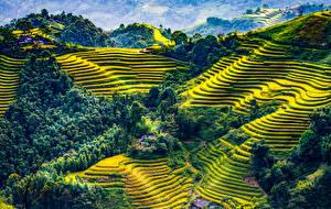 Hintergrundbilder Vietnam Felder Wälder Hügel Mu Cang Chai
