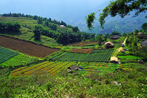 Pictures Vietnam Fields Muong Hoa Valley Sapa Nature
